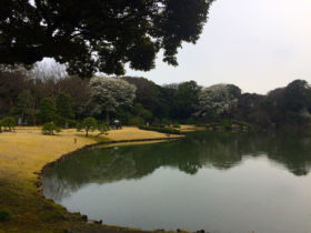 Large lake in the garden