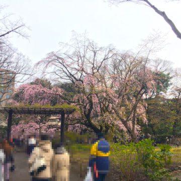 People enjoying spring